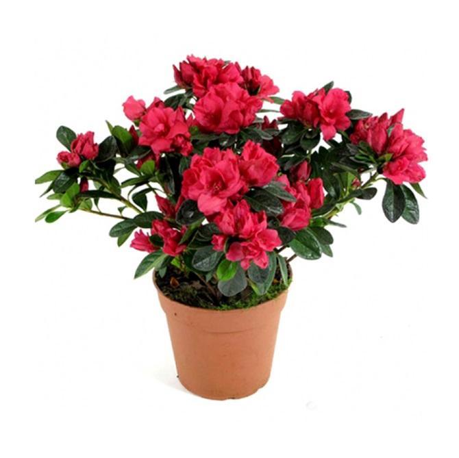 Купить растения наложенным платежом