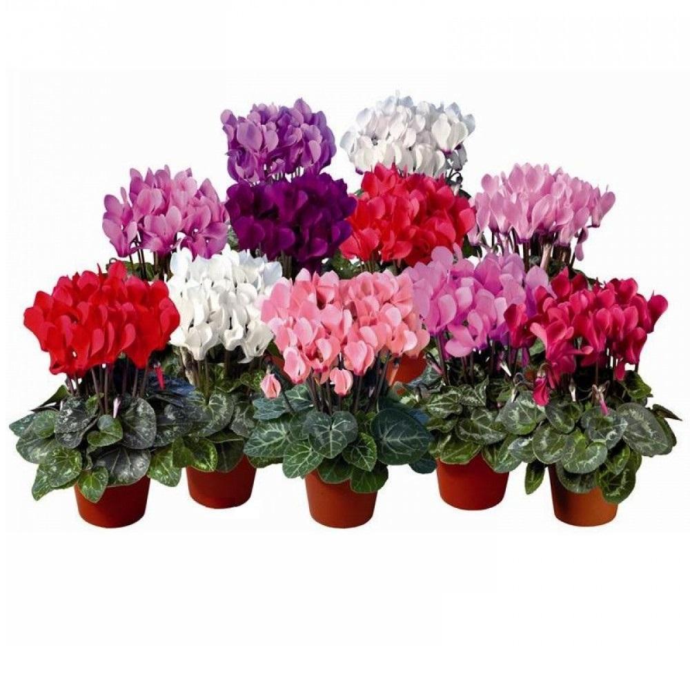 В Каких Магазинах Можно Купить Цветы